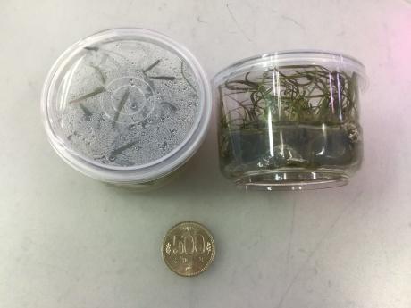201224 熱帯魚 金魚 めだか 水草 観葉植物_f0189122_12423440.jpeg