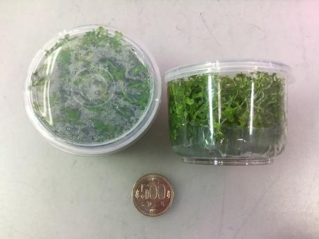 201224 熱帯魚 金魚 めだか 水草 観葉植物_f0189122_12424302.jpeg