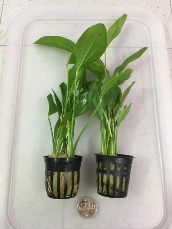 201224 熱帯魚 金魚 めだか 水草 観葉植物_f0189122_12425208.jpeg