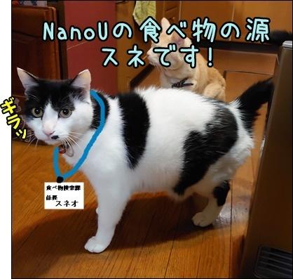 なのねこ夢気分 今年の漢字2020_b0151748_16031576.jpg