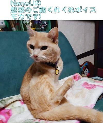 なのねこ夢気分 今年の漢字2020_b0151748_16033630.jpg