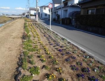 井畑花の道サークル・・・・リバーサイドガーデン_b0105374_14175220.jpg