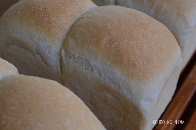 自家製酵母食パン&紅茶オレンジチョコ_f0329586_15094609.jpg