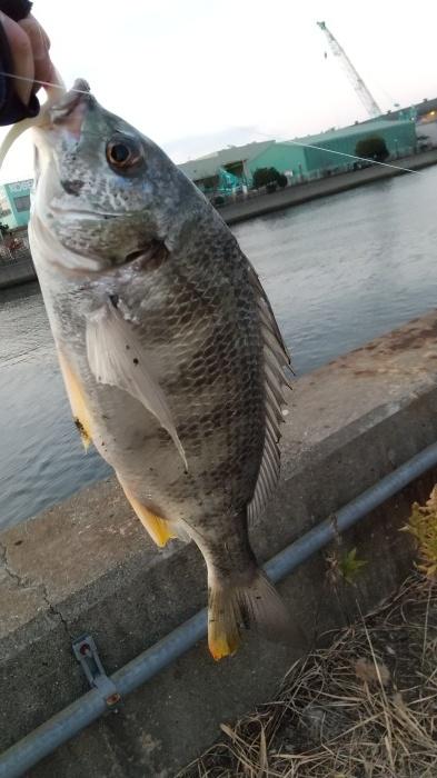 大阪湾 チヌ_b0163792_22362591.jpg