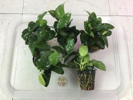 201224 熱帯魚 金魚 めだか 水草 観葉植物_f0189122_12385326.jpeg