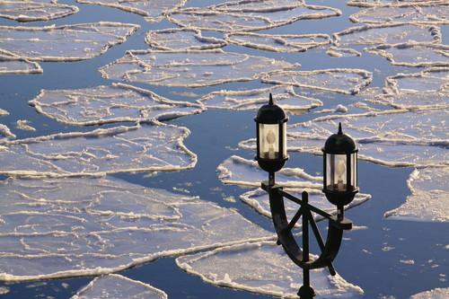 雪がない!  12月23日_f0113639_16321555.jpg
