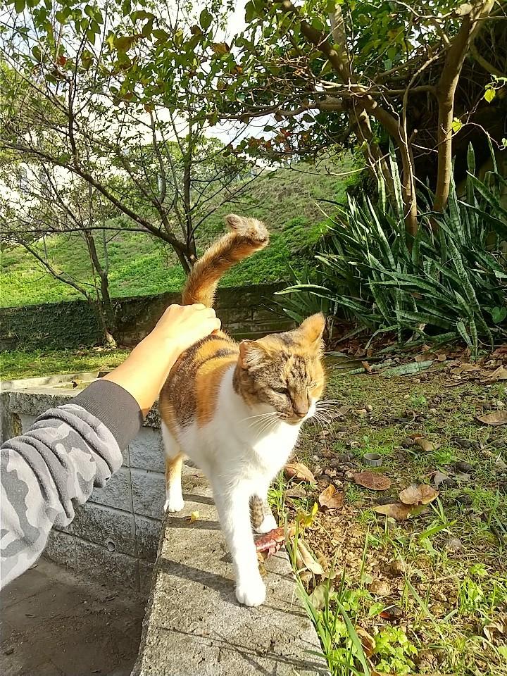 猫三昧(笑)_e0251855_20140319.jpg