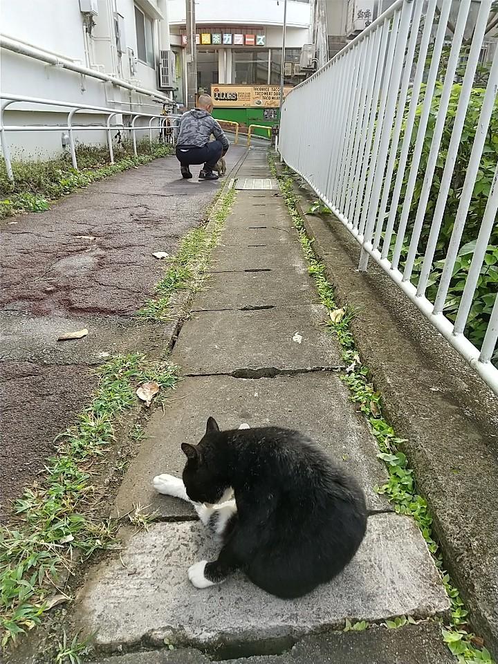 猫三昧(笑)_e0251855_20140320.jpg