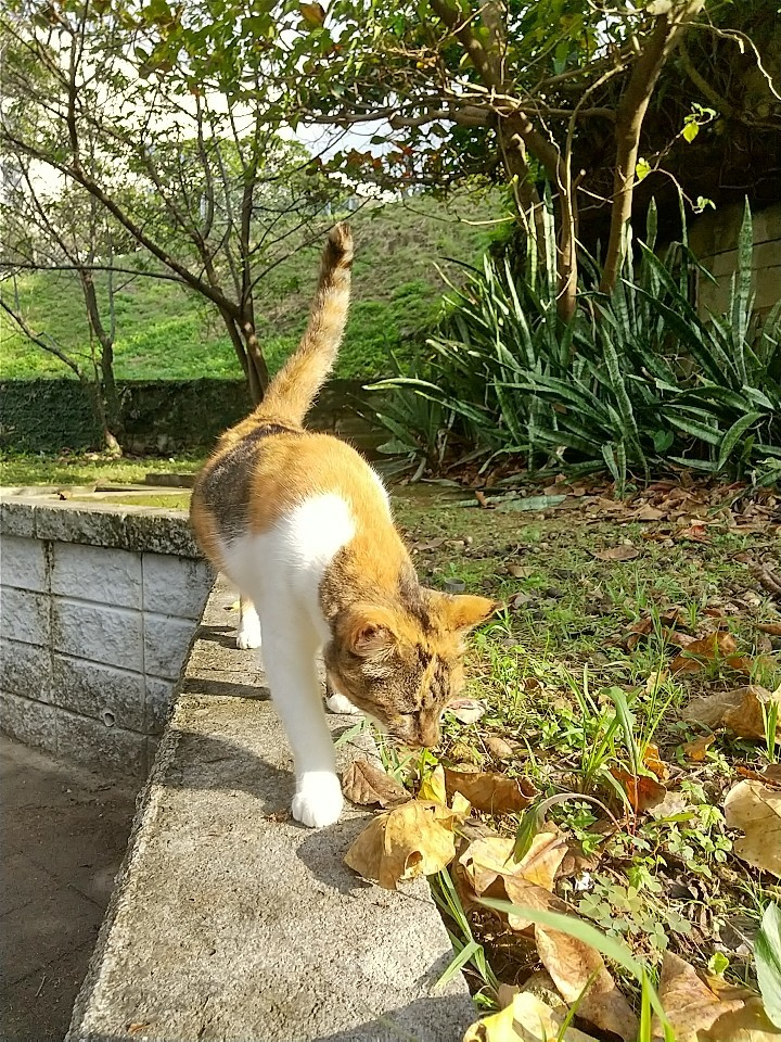 猫三昧(笑)_e0251855_20140364.jpg