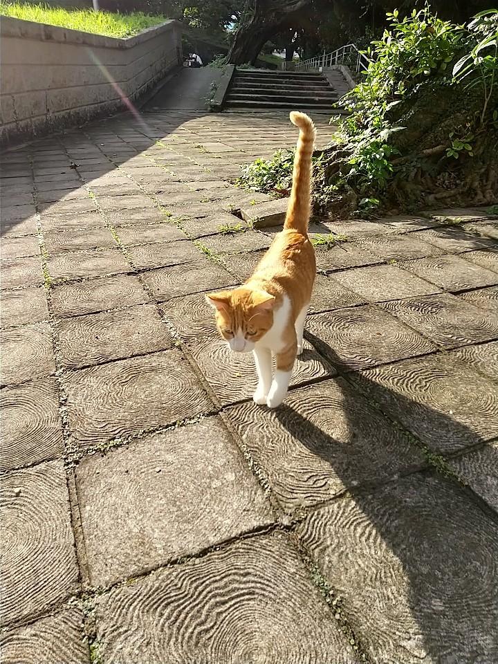 猫三昧(笑)_e0251855_20140484.jpg
