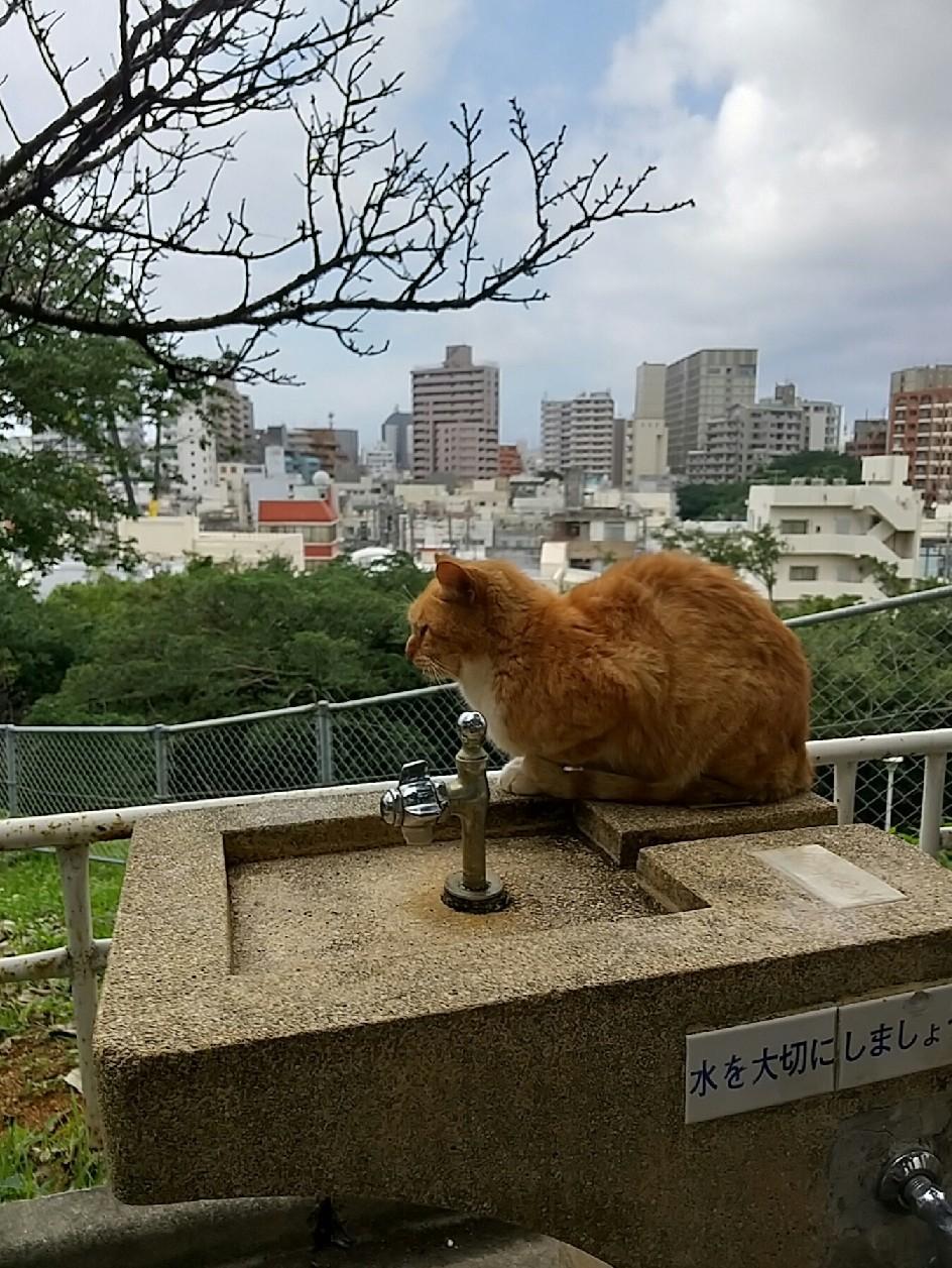 猫三昧(笑)_e0251855_20161251.jpg