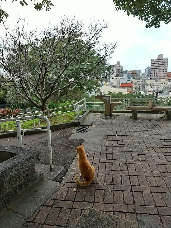 猫三昧(笑)_e0251855_20161280.jpg