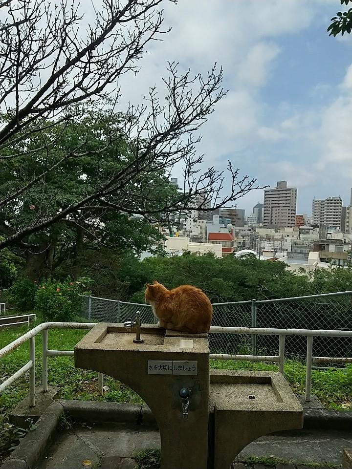 猫三昧(笑)_e0251855_20161291.jpg