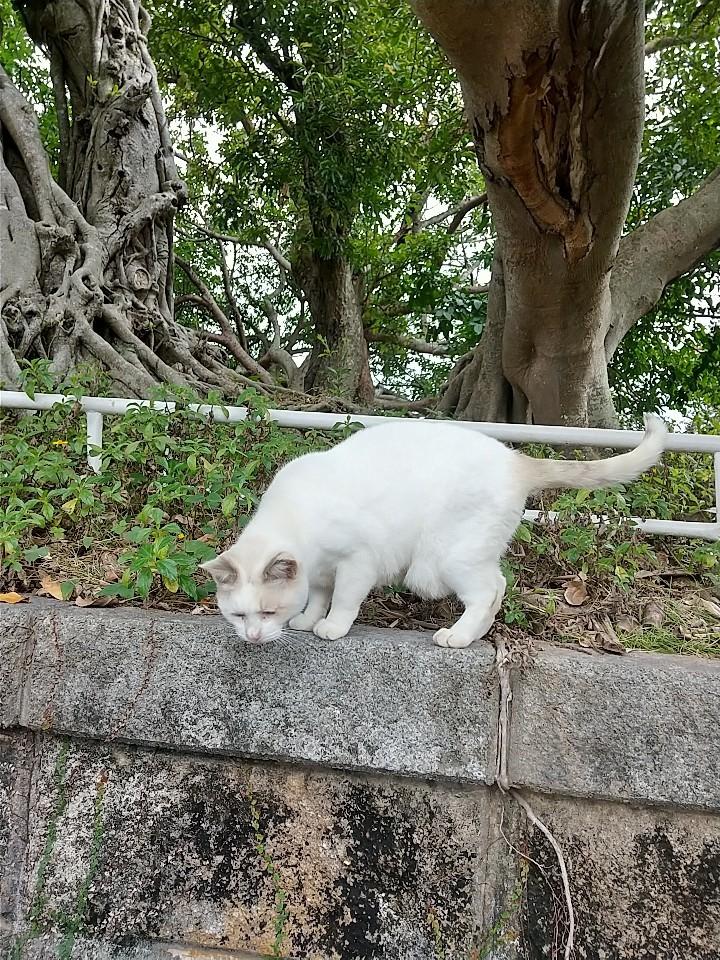 猫三昧(笑)_e0251855_20161306.jpg