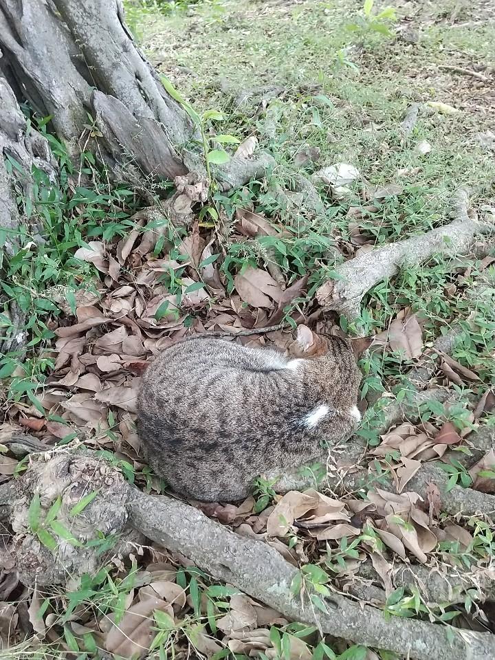 猫三昧(笑)_e0251855_20170942.jpg