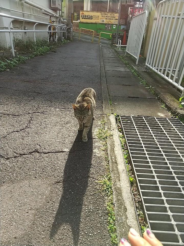 猫三昧(笑)_e0251855_20190825.jpg