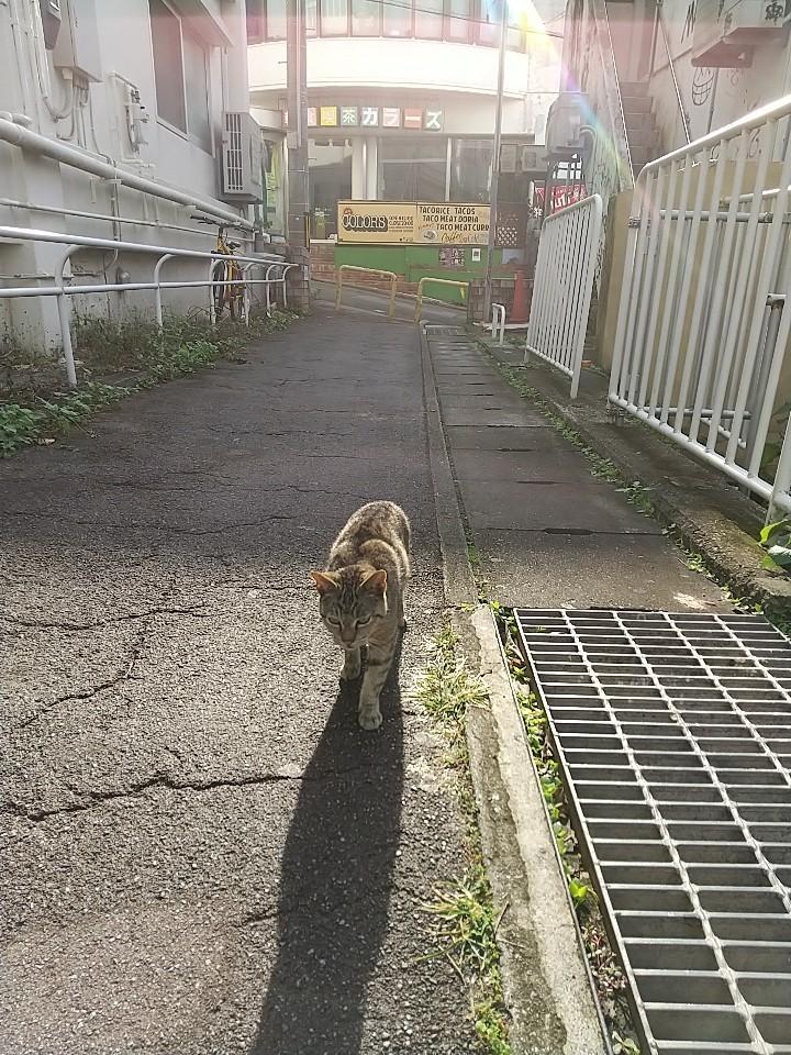 猫三昧(笑)_e0251855_20190891.jpg