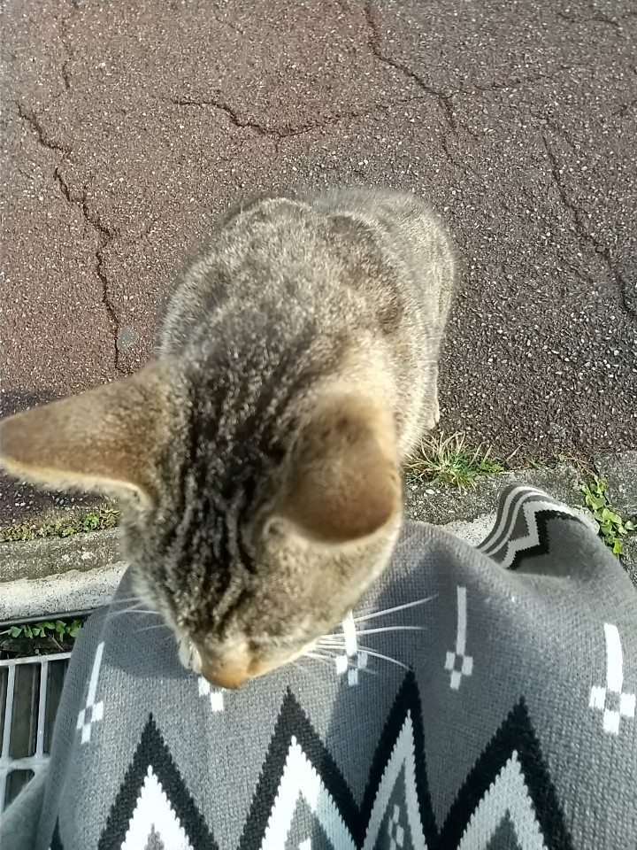 猫三昧(笑)_e0251855_20190959.jpg