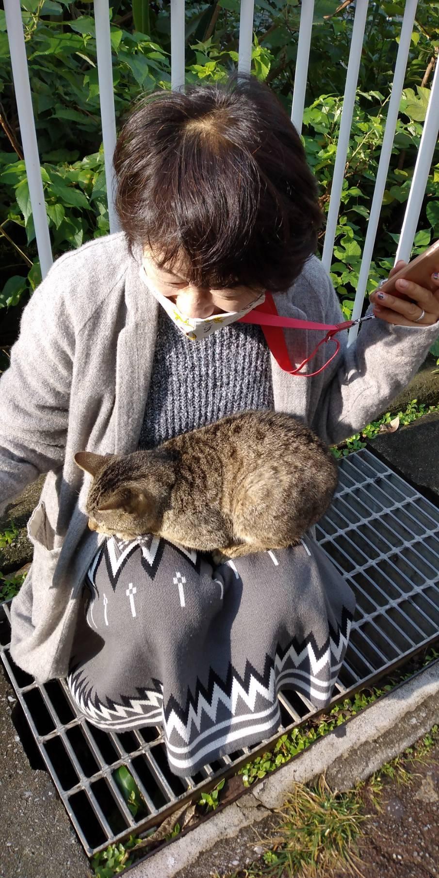 猫三昧(笑)_e0251855_20190982.jpg