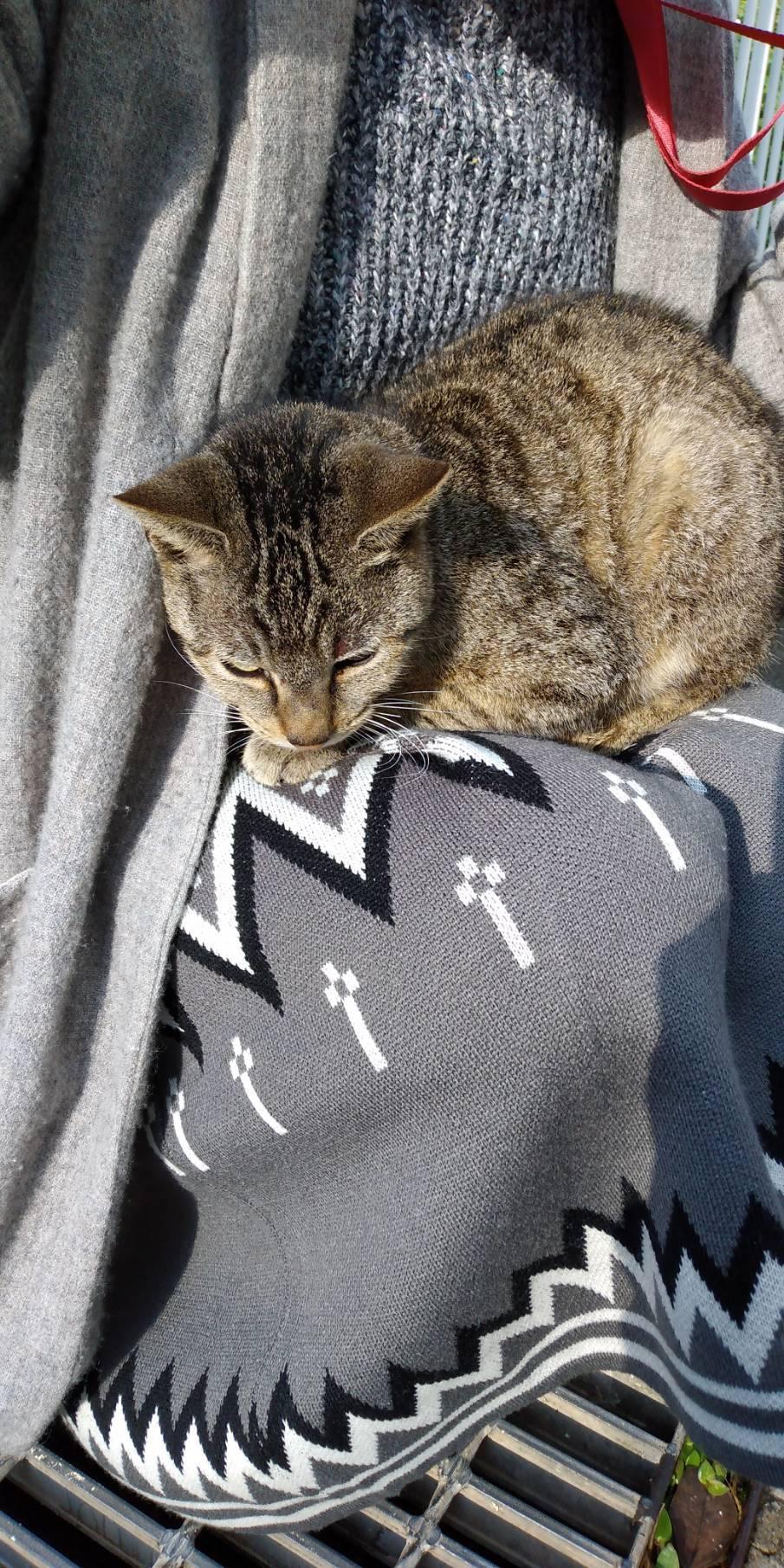 猫三昧(笑)_e0251855_20211090.jpg