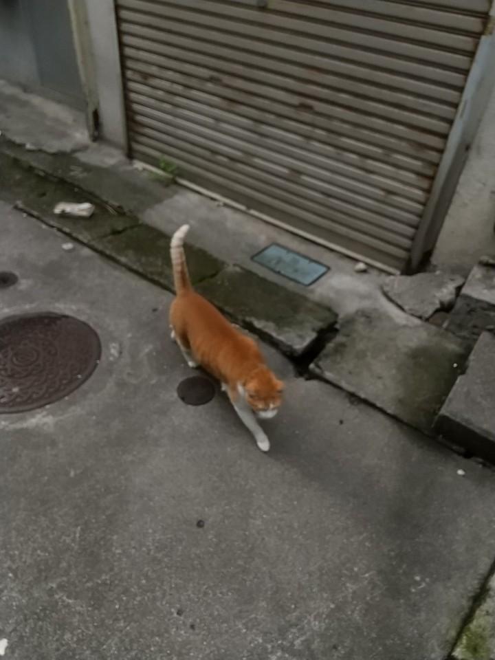猫三昧(笑)_e0251855_20211104.jpg