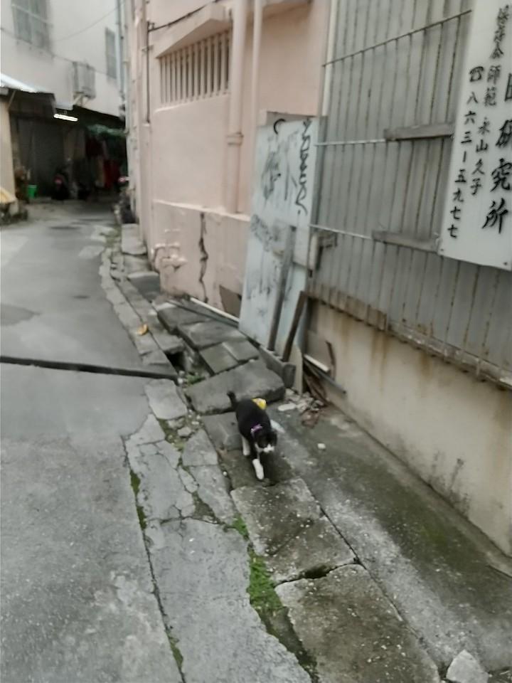 猫三昧(笑)_e0251855_20211107.jpg