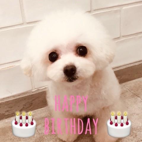 ☆ Happy Birthday ・ レナちゃん ☆_d0060413_09401616.jpg
