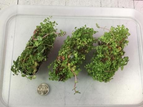 201224 熱帯魚 金魚 めだか 水草 観葉植物_f0189122_13004319.jpeg