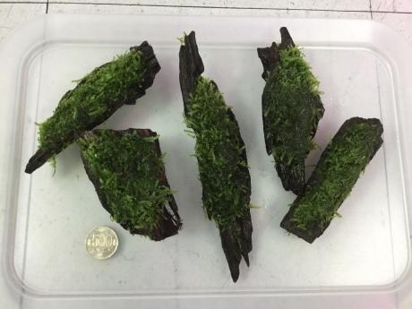 201224 熱帯魚 金魚 めだか 水草 観葉植物_f0189122_13020955.jpeg