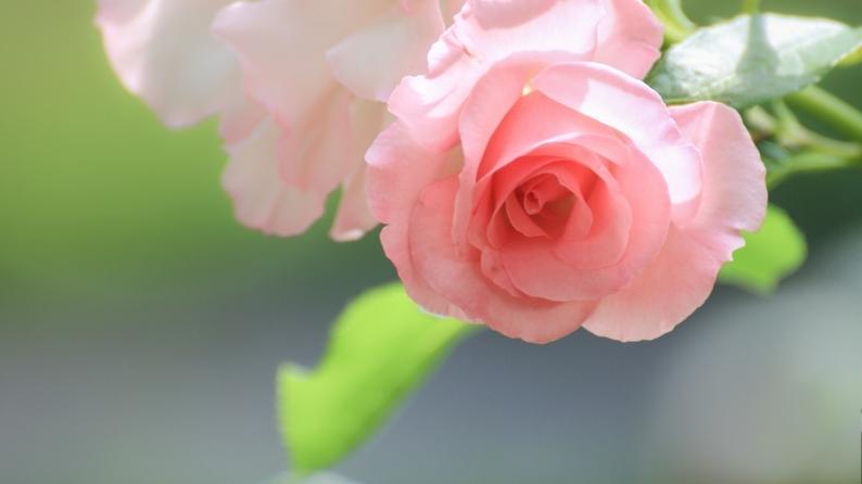 薔薇写 651_d0060435_17590779.jpg
