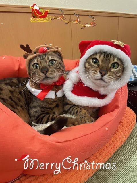 メリークリスマス&良いお年を!_c0006748_13254627.jpg
