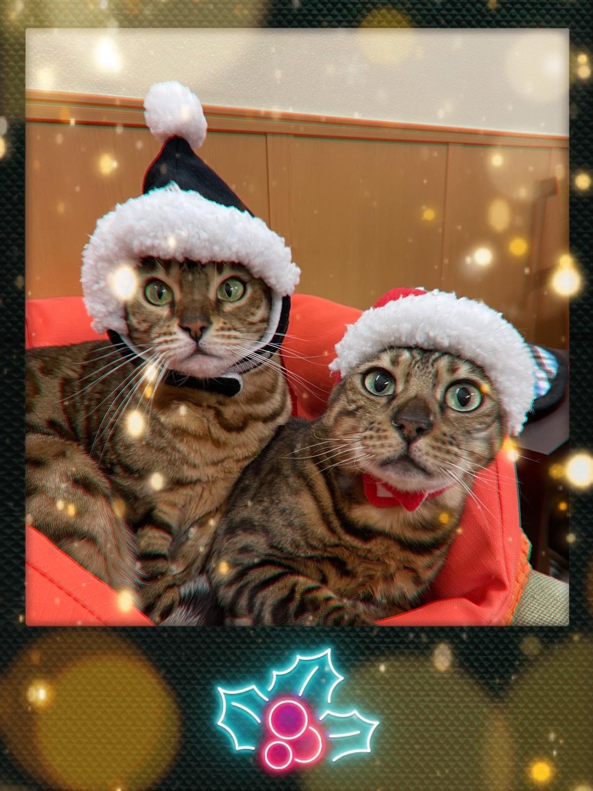 メリークリスマス&良いお年を!_c0006748_13255810.jpg