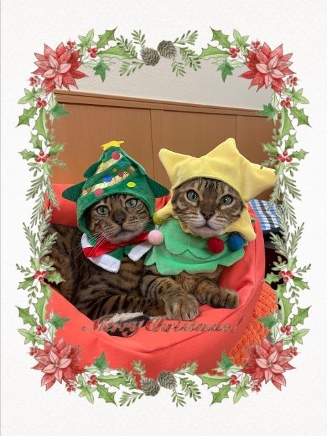 メリークリスマス&良いお年を!_c0006748_13261071.jpg