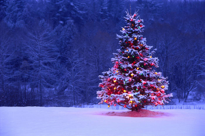 Merry Christmas_f0101174_07124522.jpg