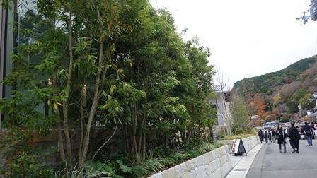 2020年秋の京都へ⑦天龍寺庭園をお散歩_f0146587_22412189.jpg