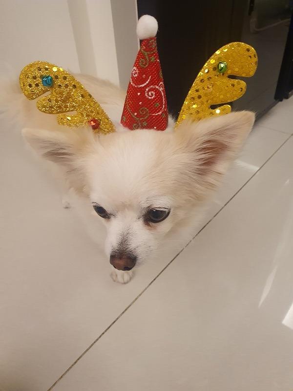 聖誕節快楽~♡そして隔離生活に終止符♡_b0182708_00484302.jpg