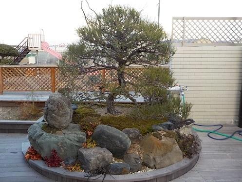 移植樹木のある庭_f0045132_14433856.jpg