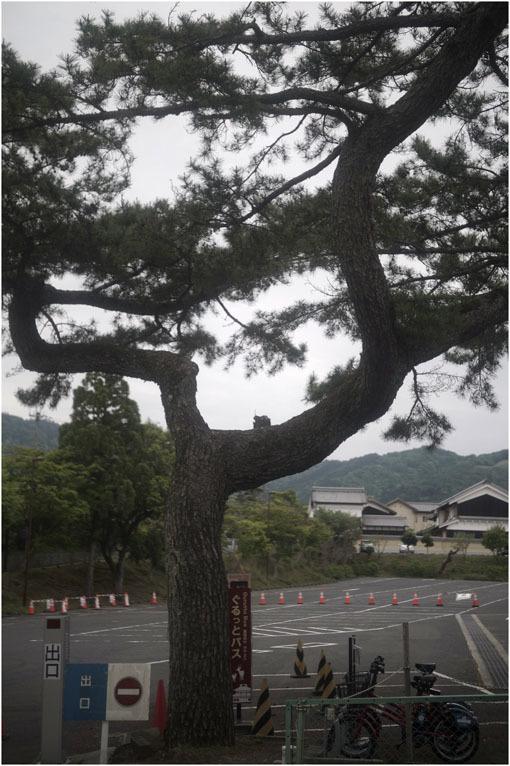 873 懐かしき友(2020年5月18日エンラージングアナスチグマート50mmF3.5奈良町を伸びやかに)_c0168172_11405976.jpg