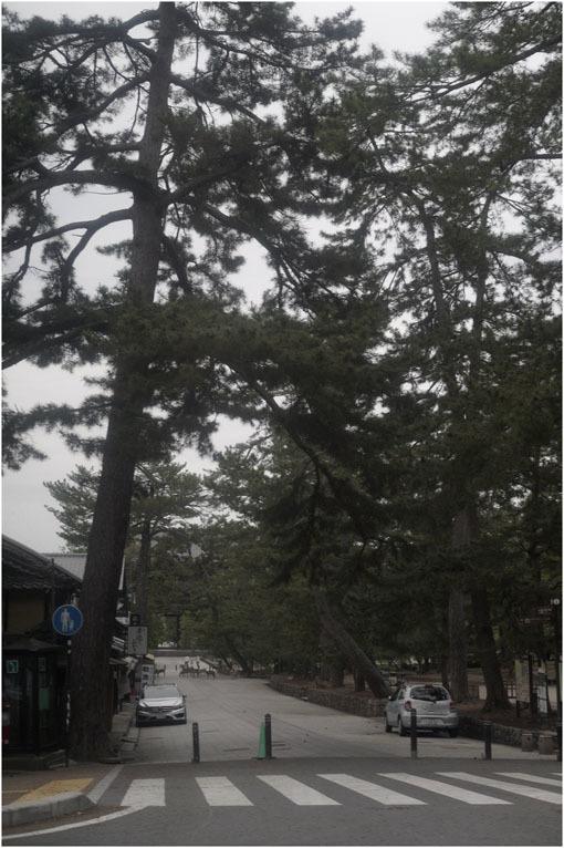 873 懐かしき友(2020年5月18日エンラージングアナスチグマート50mmF3.5奈良町を伸びやかに)_c0168172_11430726.jpg