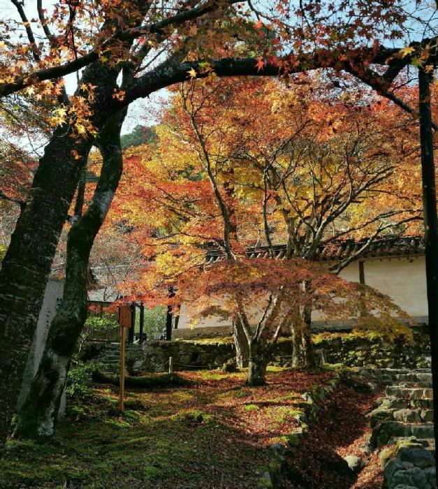 京都 二尊院_a0120774_13491780.jpg