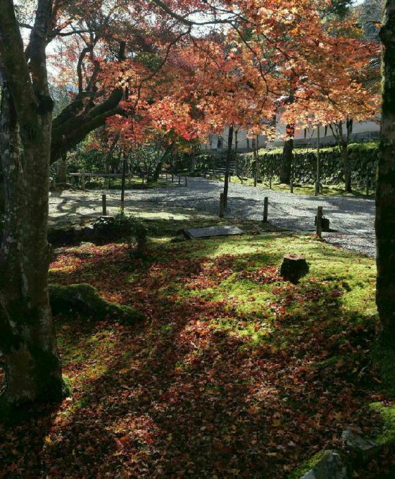 京都 二尊院_a0120774_13492904.jpg