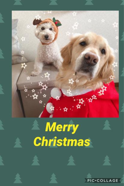 Merry Christmas_e0366676_03411958.jpg