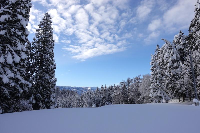 雪 2020 - Part 2_d0010432_10560637.jpg