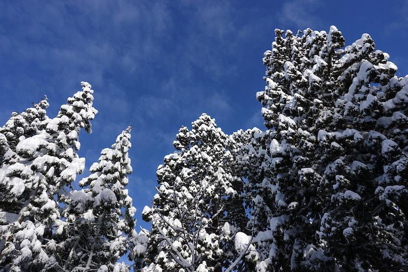 雪 2020 - Part 2_d0010432_10562249.jpg