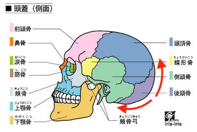 お腹の調子が気になるときには、頭の後ろを整えましょう 〜ある日の施術より〜_e0073240_06030291.jpg