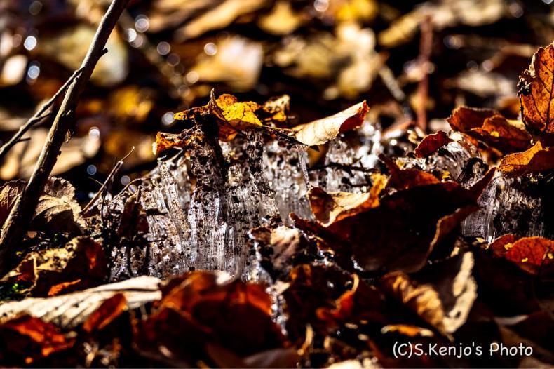 氷点下の朝_a0323543_21311855.jpg