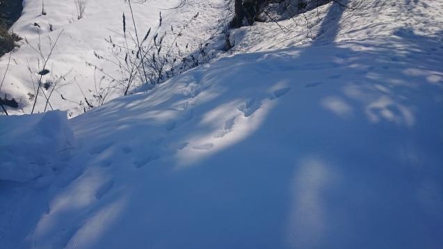雪の下で頑張っています!_c0320302_16142971.jpg