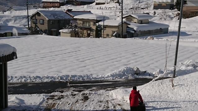 雪の下で頑張っています!_c0320302_19310060.jpg