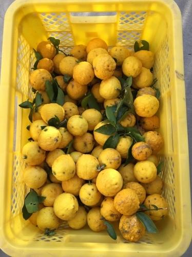 今年の収穫_e0123809_10285182.jpeg