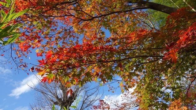 2020年秋の京都へ⑨嵐山散策を愉しむ_f0146587_18550153.jpg